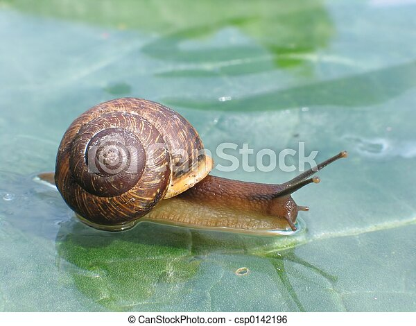 Snail on a glass surface - csp0142196