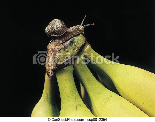 Snail on banana - csp0012354