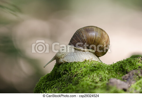 Snail on forest moss - csp29324524