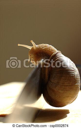 snail on knife - csp0002874