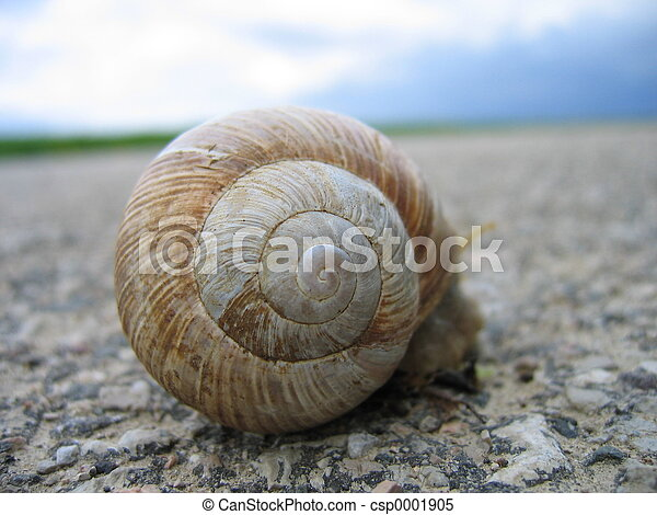 snail on the road - csp0001905