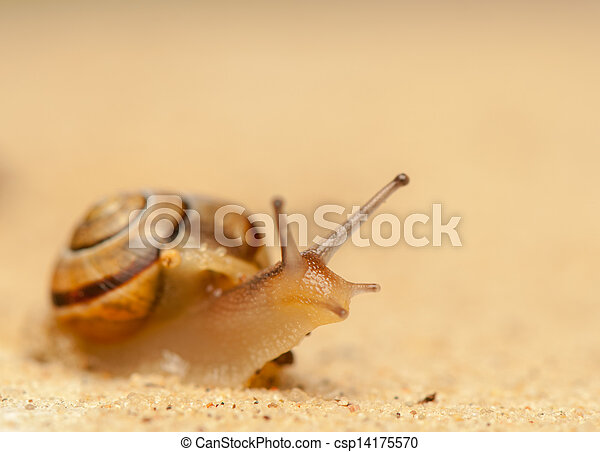 Snail - csp14175570