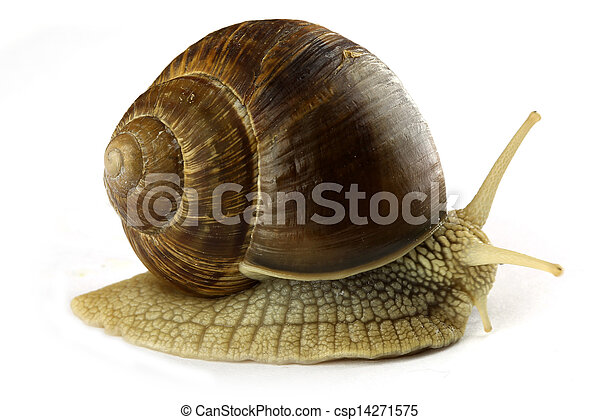 Snail - csp14271575
