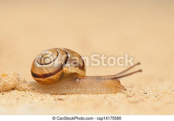 Snail - csp14175580