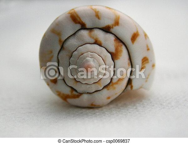 Snail shell - csp0069837
