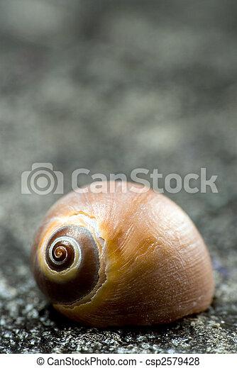 snail shell - csp2579428