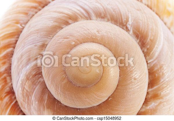 Snail Shell - csp15048952