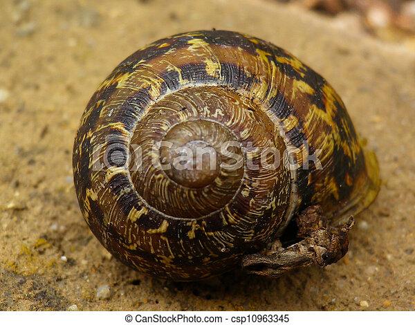 snail shell - csp10963345