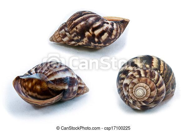 Snail shell - csp17100225