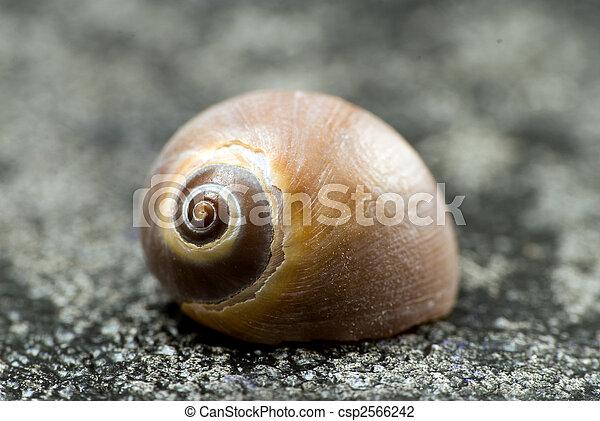 snail shell - csp2566242