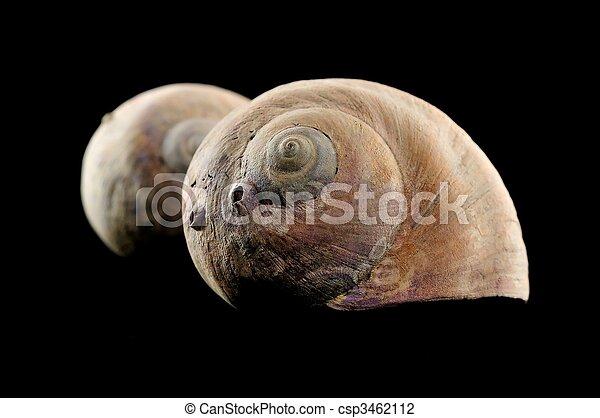 snail shell - csp3462112