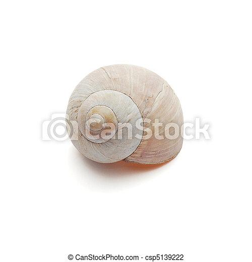 snail shell - csp5139222