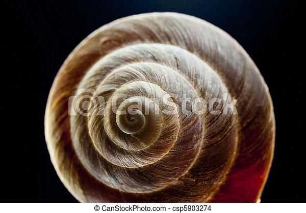snail shell - csp5903274
