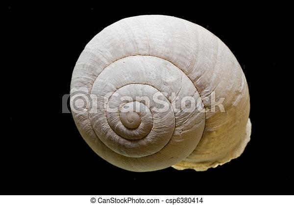 Snail shell - csp6380414