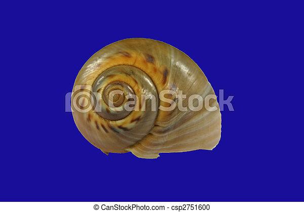 Snail shell - csp2751600