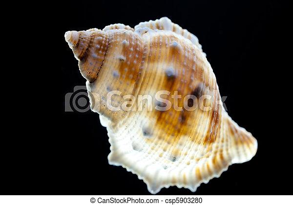 snail shell - csp5903280