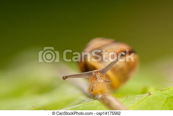 Snail - csp14175562