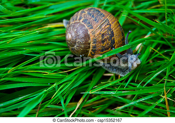 snail - csp15352167