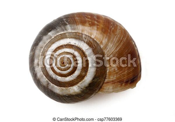 Snail - csp77603369
