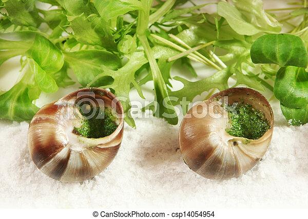 snail - csp14054954
