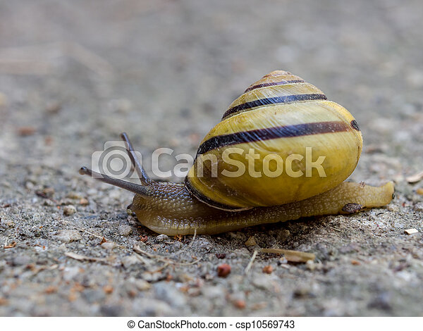 Snail - csp10569743