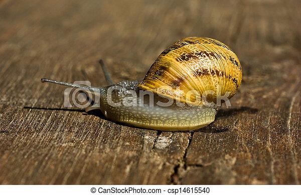 Snail - csp14615540