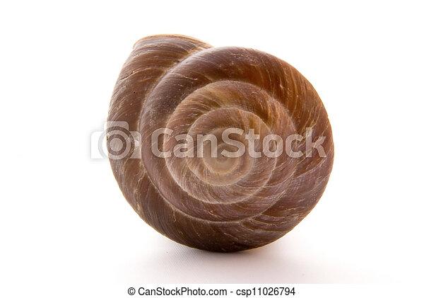 Snail - csp11026794