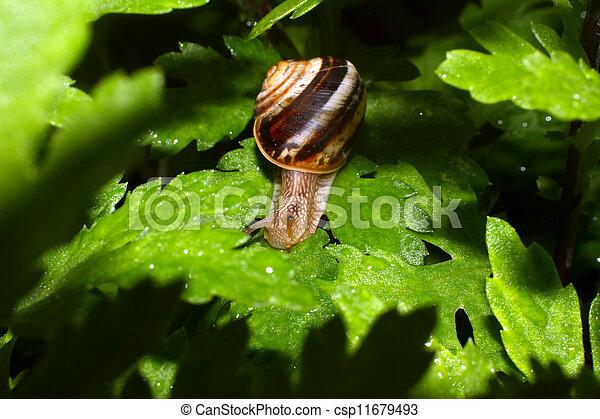 snail - csp11679493