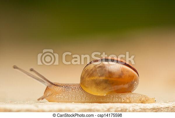 Snail - csp14175598