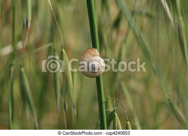 Snail - csp4240653