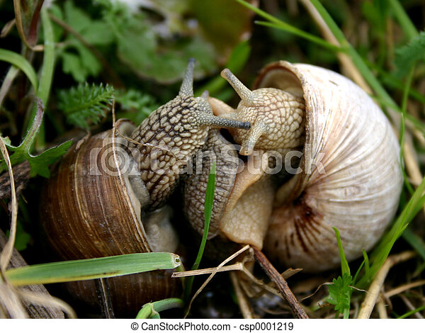 Snails love-1 - csp0001219
