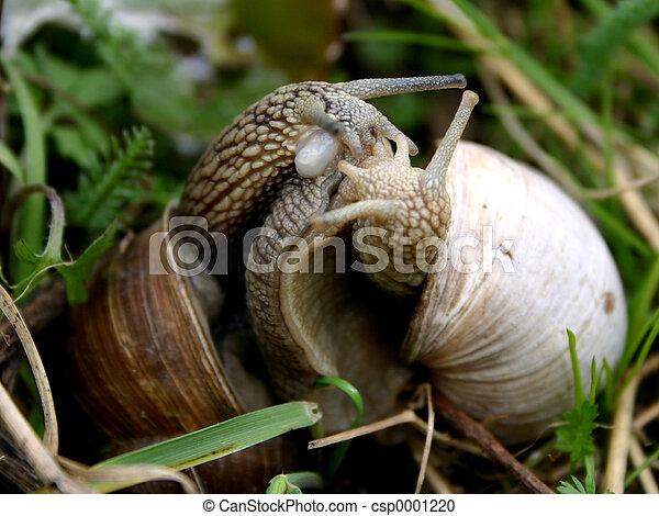 Snails love-2 - csp0001220
