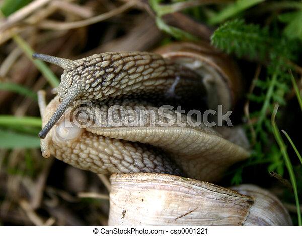 Snails love-3 - csp0001221