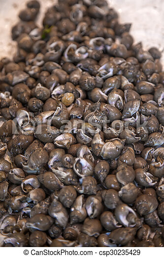 Snails on the market in Turin, Italy - csp30235429