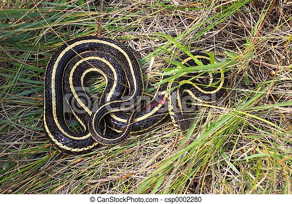 Snake #3 - csp0002280