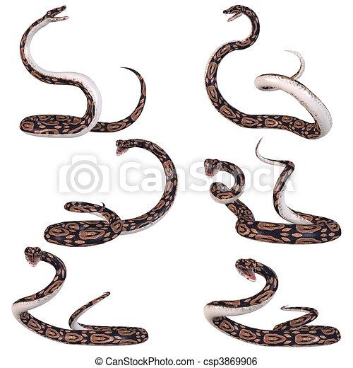 Python Illustrations and Clip Art  4,350 Python royalty free