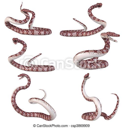snake copperhead csp3869909