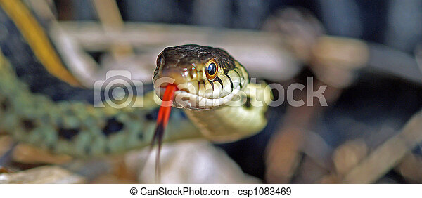Snake in the grass - csp1083469