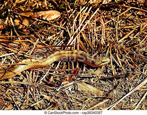 snake - csp36340387