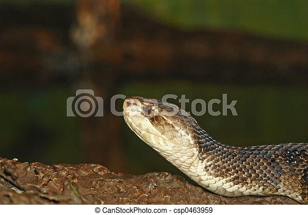 Snake - csp0463959