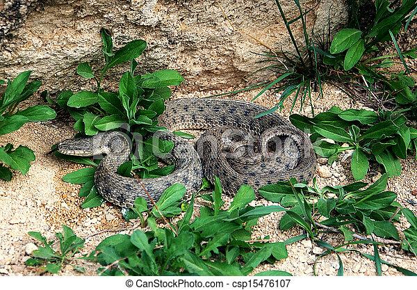 snake - csp15476107