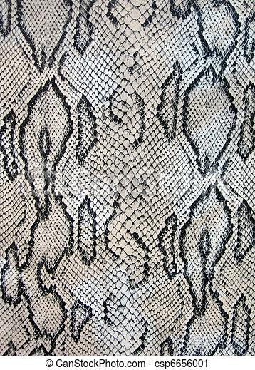 snake texture closeup - csp6656001
