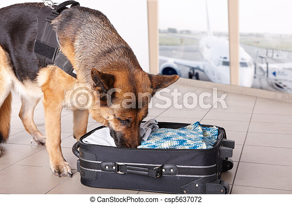 Sniffing dog at the airport - csp5637072