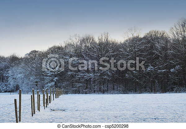 Snow covered meadow and trees in winter time - csp5200298