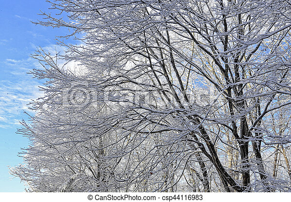Snow Covered Trees and Blue Sky - csp44116983