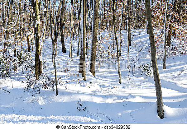 Snow Covered Woods - csp34029382