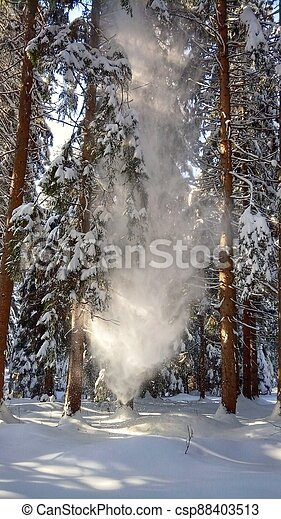 Snow fall from tree - csp88403513