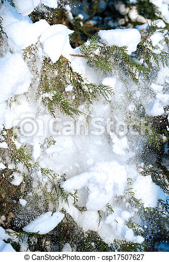 Snow falling from fur-tree branches - csp17507627
