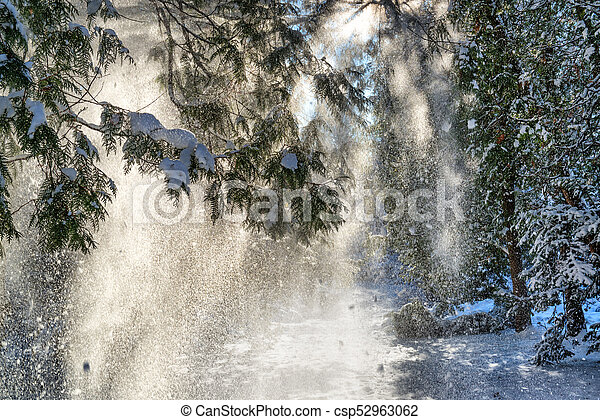 Snow falling from spruce trees - csp52963062