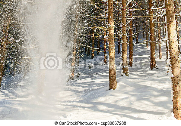 Snow falling from the tree - csp30867288
